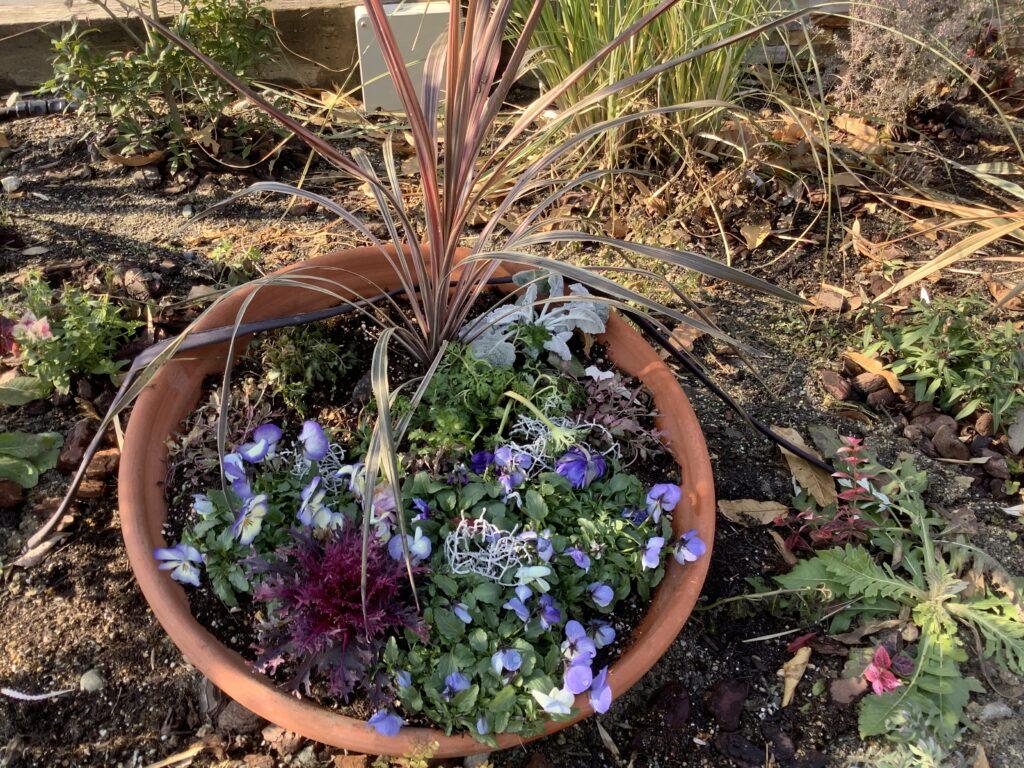 寒さに耐える植物